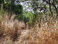 #8: Toyo hide at the old descend between high grass