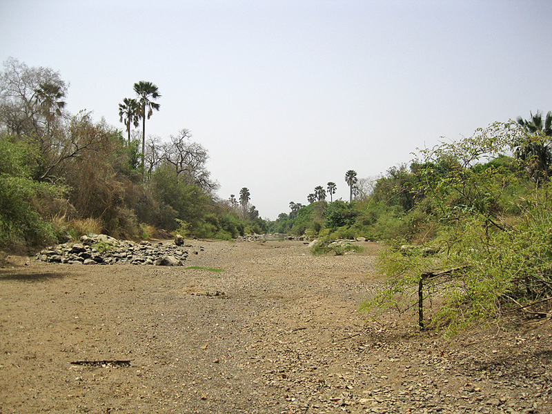 We crossed a dry stretch of the Niokolo Koba River; it's a major tributary of the Gambia River