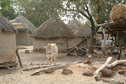 #8: One of many widely scattered Peul (Fulani) villages in the pastoral zone