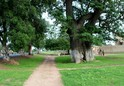 #8: Baobab tree close to the road in Mbos