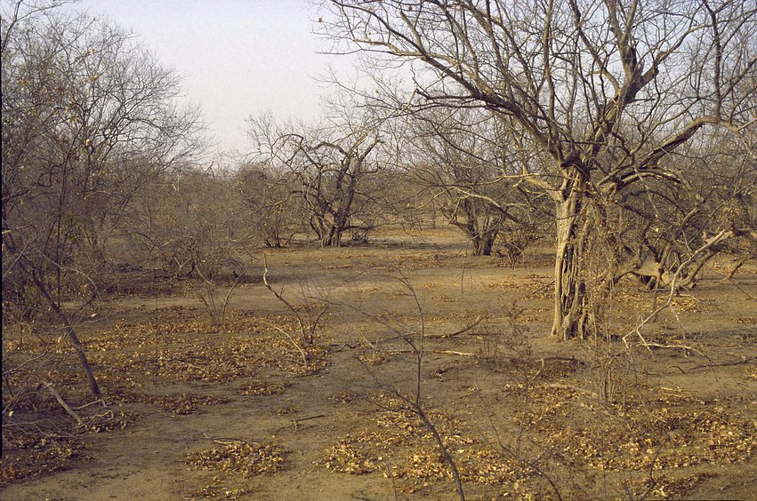 Dry season aspect of the landscape; compare with wet season photo