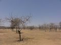 #4: Local landscape in Dafra