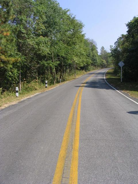 Road passing confluence, the spot is in forest on left