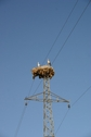 #10: Bird nest on a pylon, on the road coming back from the CP