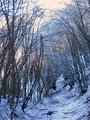 #10: The spooky beauty of the woods / Ormanin korkutucu guzelligi
