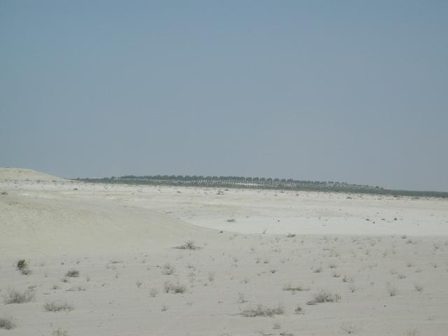 Greening the desert (view to the NE)