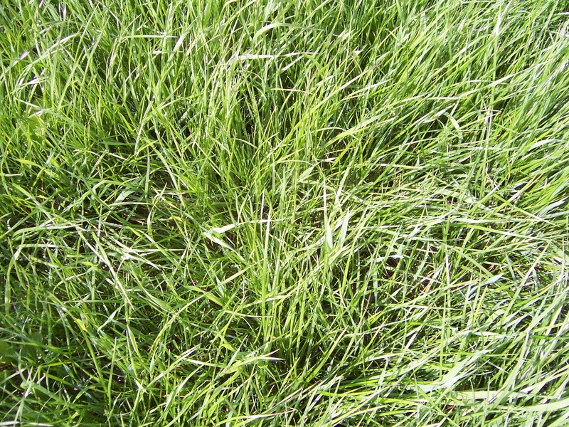 grass at the confluence