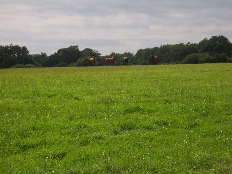 horses in a nearby field