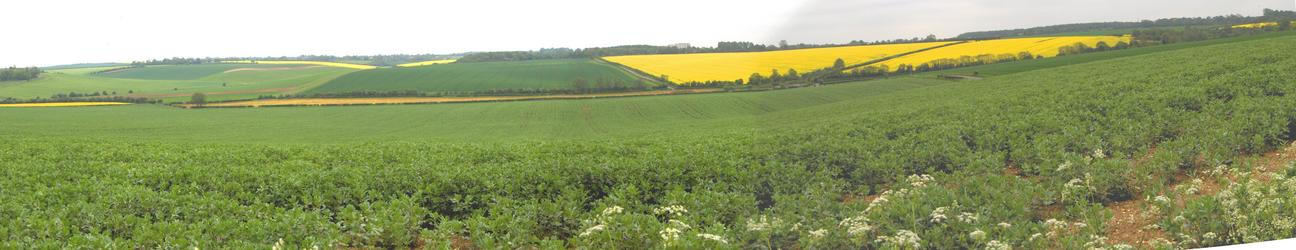 Crop fields around the CP area