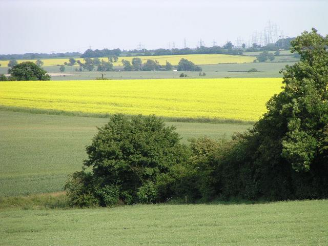 passing a rapefield on the way to the Prime Meridian