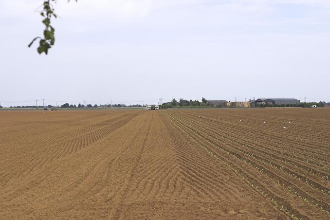 General view - crop planting taking place.