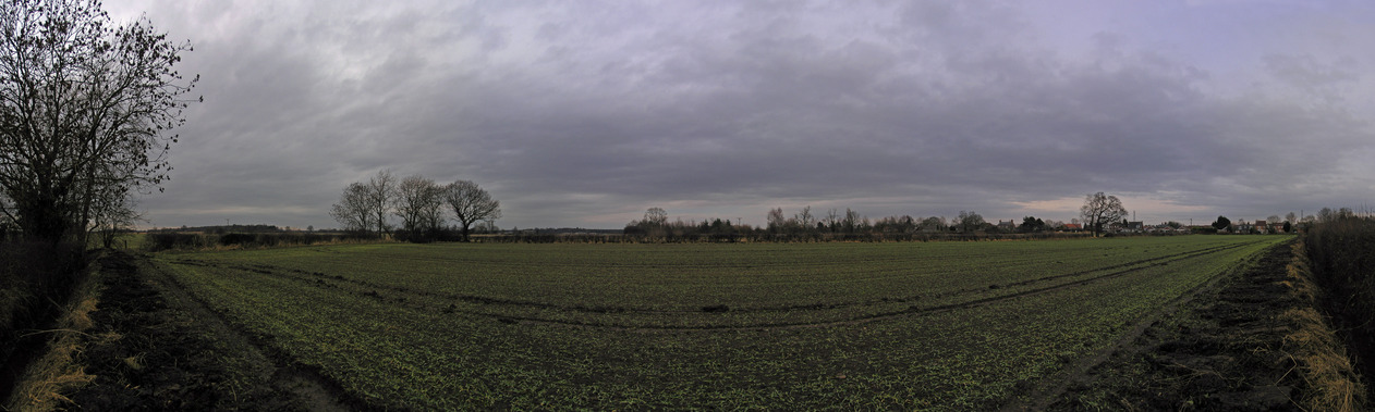 180-degree panorama from the edge of the field