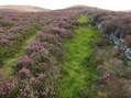 #7: Heather lined track leading up from Allt Dowrie