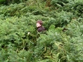 #2: John in deep bracken close to road