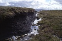 #7: peat canyon