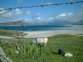 #7: just another beach.....and sheep