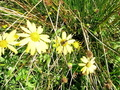 #9: Yellow flowers in the meadow.