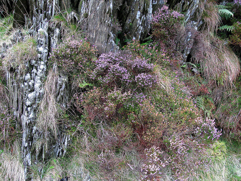 Wild flowers, heather and ferns growing in the rocks along the grassy path beyond the confluence.