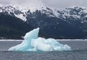 #6: Iceberg and Bald Eagle