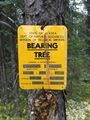 #9: The Bearing Tree in about 600 m distance