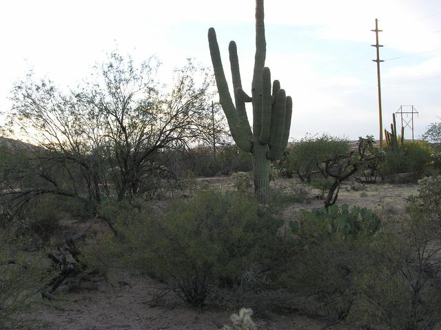 View west (of this confluence point's signature cactus)