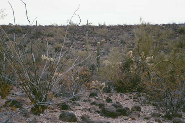Another view from the confluence point.  Note the variety of cactus.