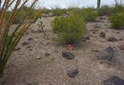 #5: The confluence point lies near a ridge top, surrounded by several varieties of cactus
