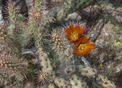 #8: Flowering cactus near the point