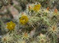 #9: Flowering cactus near the point