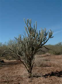 #1: A cactus at the confluence