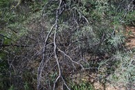 #3: The confluence point lies in this cluster of thorny bushes
