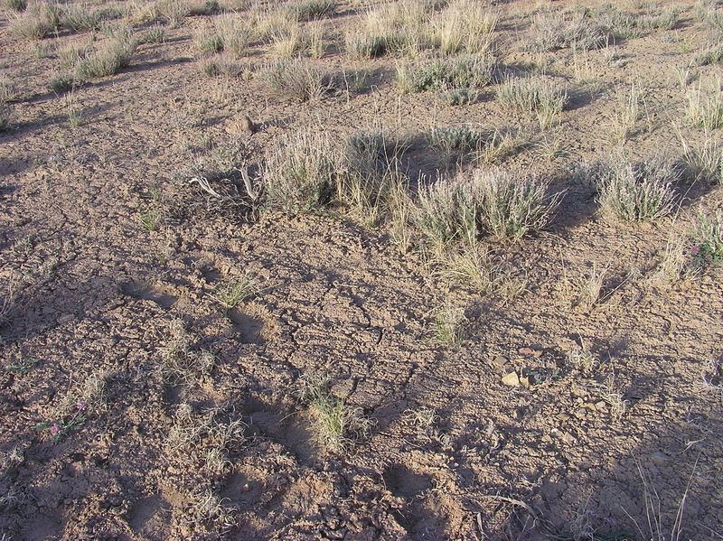 The confluence point lies in soft, poor-quality soil, amongst thinly-spaced sagebrush