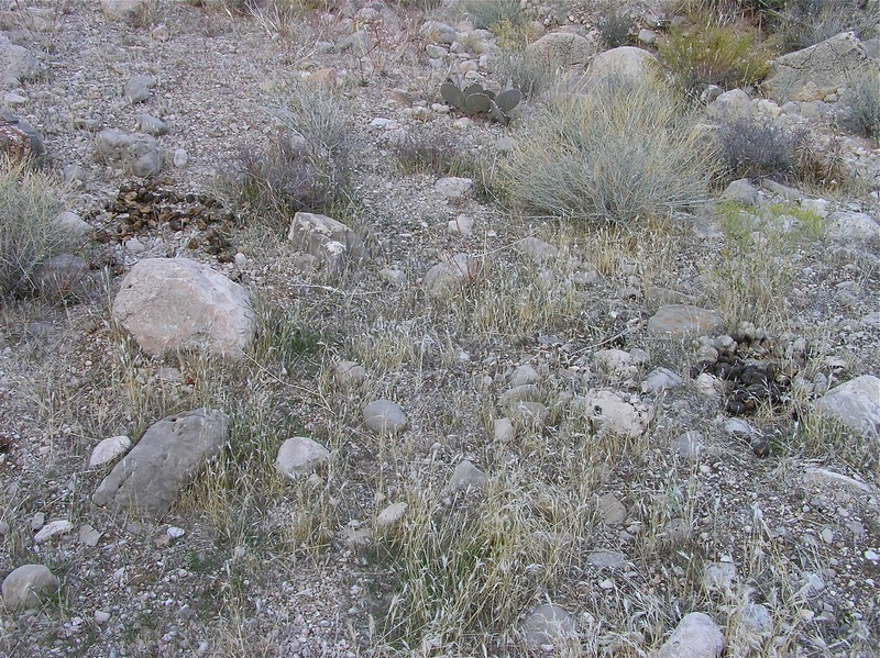 The confluence point lies beside a small wash, with desert grass, rocks, and horse poop