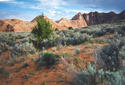 #5: coyote buttes