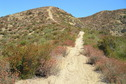 #6: Trail through the chaparral, 300 meters north of the confluence.