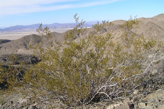#1: Confluence of 35 North 116 West, at the creosote bush, in the foreground, looking northwest.