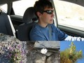 #7: A teenager drives through the blooming desert
