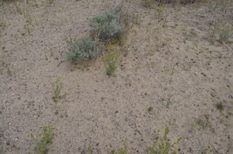 #1: The confluence point lies in thinly-vegetated desert land