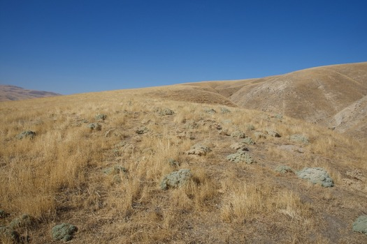 #1: The confluence point lies on top of this grassy ridge. (This is also a view to the West.)