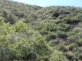 #5: View west (back up the steep hill, towards Sierra Madre Road)