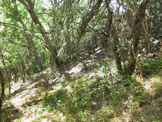 #1: Picture of the confluence.  I got all zeros just past the patch of Poison Oak in the foreground.