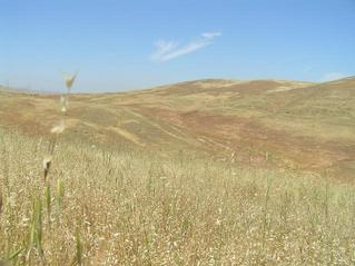 "#1: ""The golden rolling hills of California"" --Folk Singer Kate Wolf.  View to the north from 37 North 121 West."