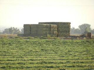#1: Fresh stack of hay bales from the confluence field