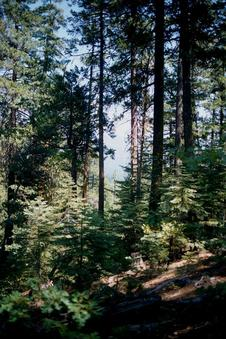 #1: Tall trees at this beautiful forest location.