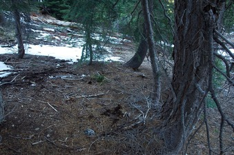 #1: The confluence point lies on a forested slope, with (in mid-April) several patches of snow nearby