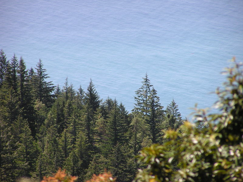 A view of the ocean from the Lost Coast trail, near the confluence point