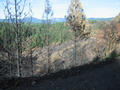 #4: Forest fire burn along Pitt 5 Road