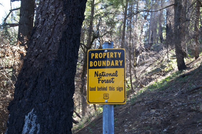 A National Forest boundary sign, next to a burned tree trunk, about 300 feet from the confluence point