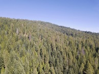 #8: View North (up the slope, into Oregon), from 120m above the point