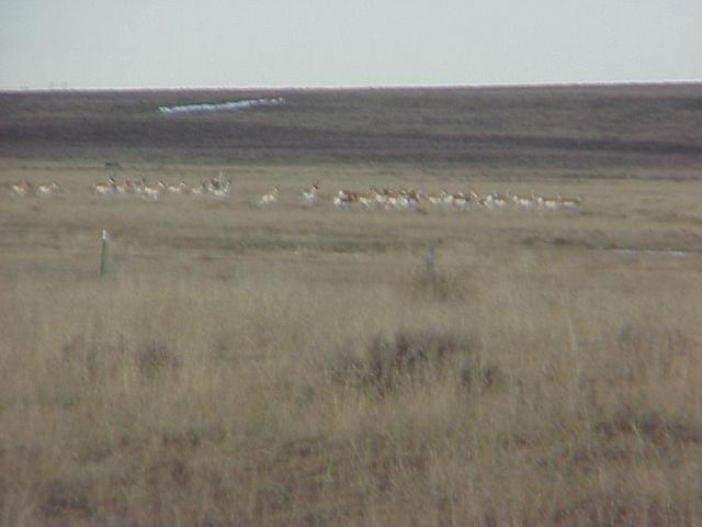 View to the northeast from the confluence, showing antelope.